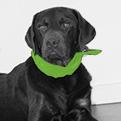 Oscar Therapiehund in Ausbildung